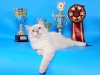 Невские маскарадные котята. Упавушка Невская Тайна